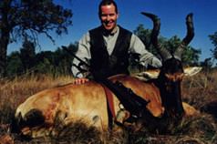 Monster Redhartebeest